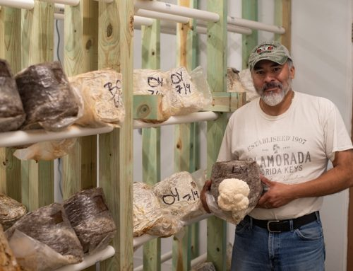Growing a Mushroom Farmer: One man's healing new career
