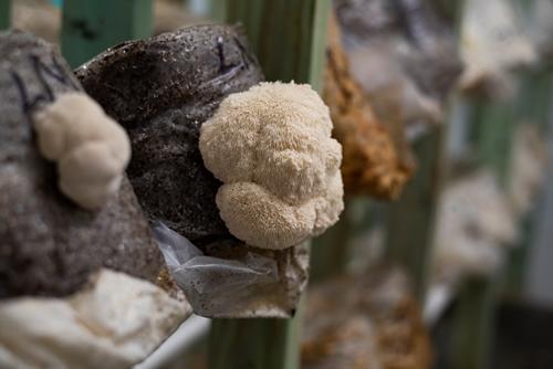 Growing A Mushroom Farmer One Mans Healing New Career 03